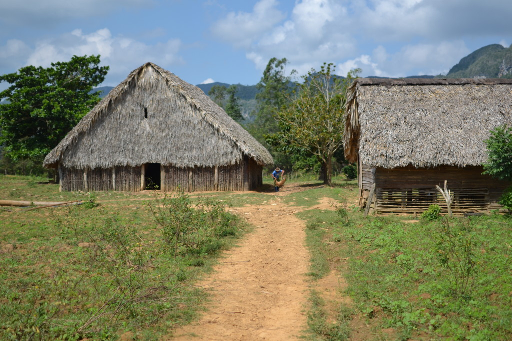 Hütten zur Trocknung der Tabakblätter