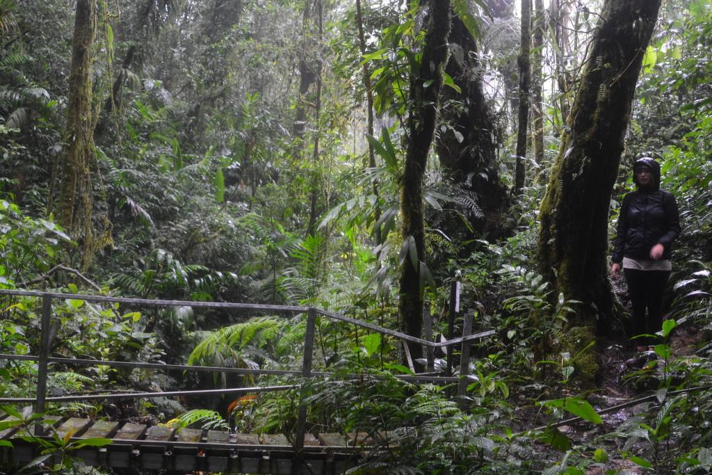 Nebelwald von Monteverde