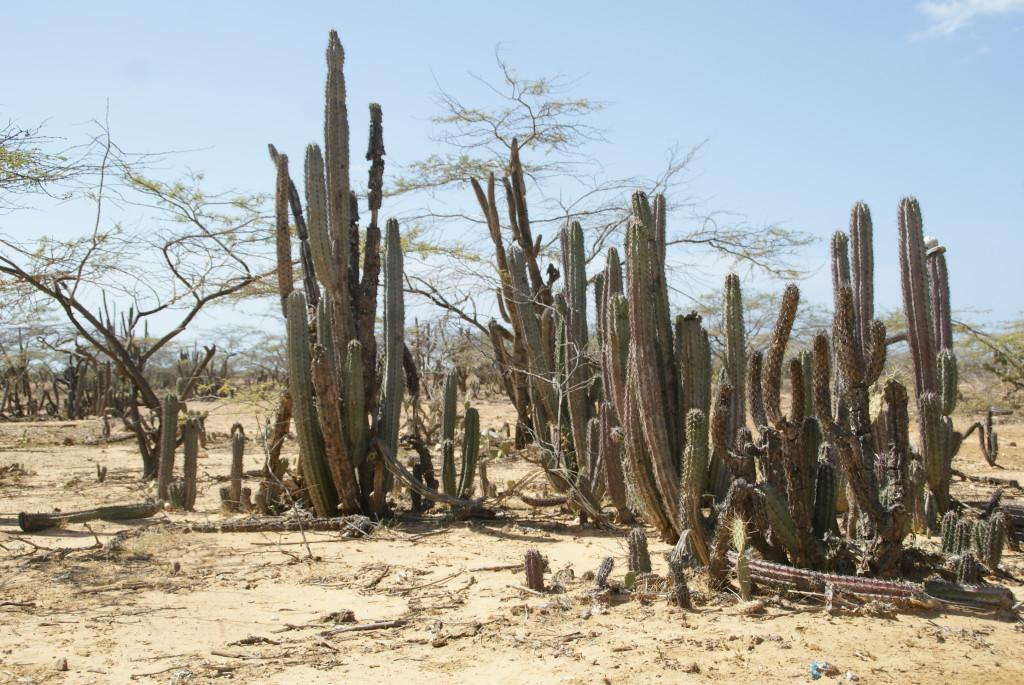 Wüstenatmosphäre