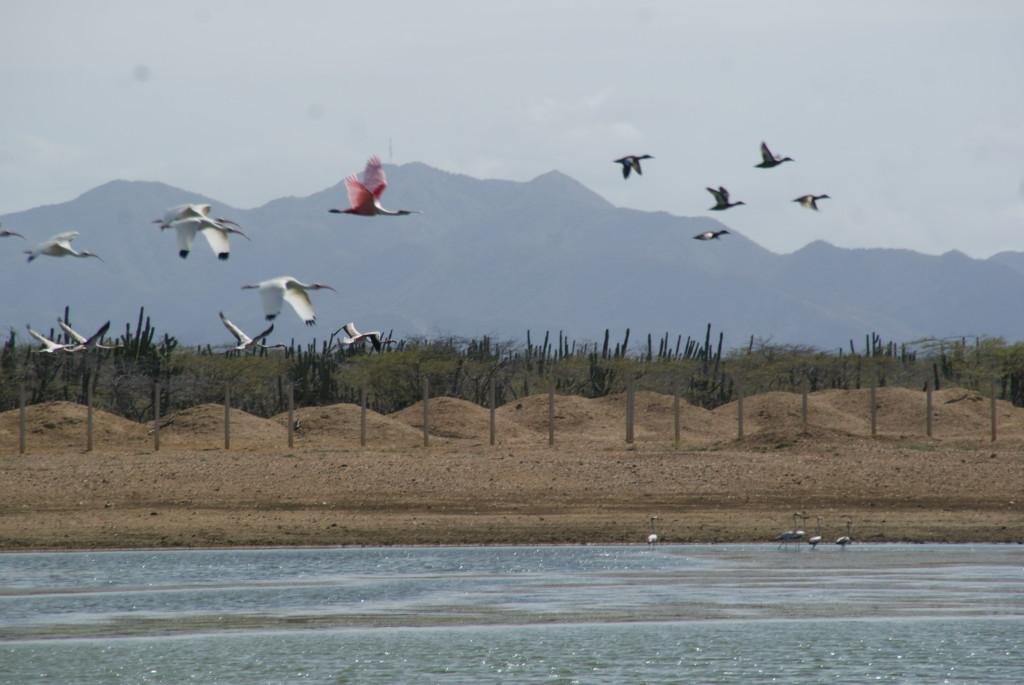 Kleiner Stopp um Flamingos fliegen sehen